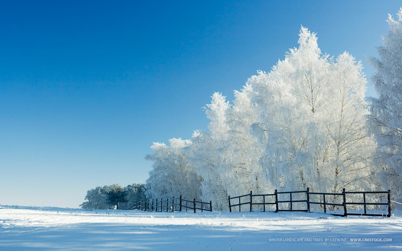Fondo de Pantalla Nieve